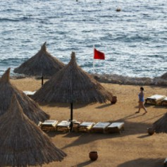 На египетском курорте турист из Германии погиб в результате нападения акулы