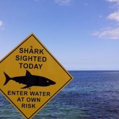 Туроператоры должны предупреждать клиентов об акулах