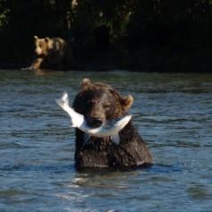 На Сахалине раньше обычного срока проснулись медведи