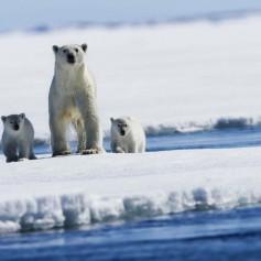 Рогозин призвал развивать российский туризм в Арктике
