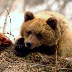 В России запретят посещать заповедники в случае усиления опасности пожаров