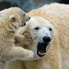 Туристы назвали Новосибирский зоопарк одним из лучших в Европе