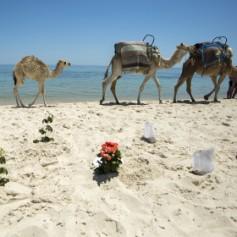 «Аль-Джазира» рассказала о положении туристической отрасли Туниса после теракта