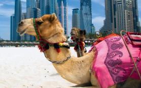 Что важно знать путешественнику в мусульманских странах