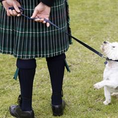 В Шотландии объявили о поисках собаки на должность туристического посла