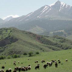 Премьер Киргизии призвал улучшать туристическую инфраструктуру республики