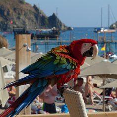 Турция за месяц вновь стала самой популярной у российских туристов страной