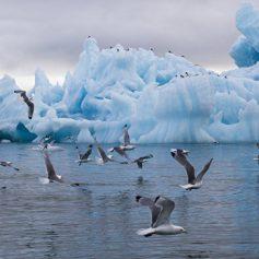 Ростуризм предложил россиянам круизы на Северный полюс