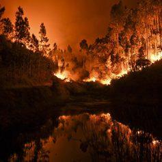 Среди погибших из-за пожаров в Португалии нет российских туристов