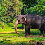 Шри-Ланка - остров слонов, чая и буддизма