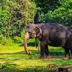 Шри-Ланка — остров слонов, чая и буддизма