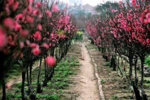 Названы лучшие направления для путешествий весной