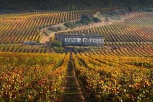 Эксперты назвали лучшие винные маршруты Испании