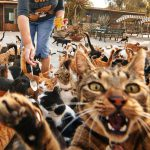 Сотни и тысячи кошек оккупировали портовый город в Марокко