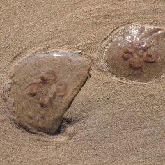 Пляжи Канарских островов закрыли из-за нашествия ядовитых медуз