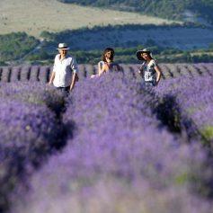Крым-пакет: европейских туристов повезут на полуостров