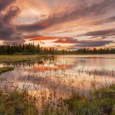 Названа лучшая страна для путешествий по дикой природе