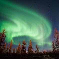 Власти Ямала представят в 2020 году северное сияние как туристический бренд