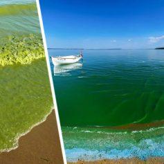 В Турции бьют тревогу: морские сопли угрожают туризму